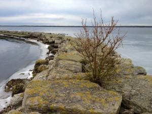 Gotland 2013-01-30 048